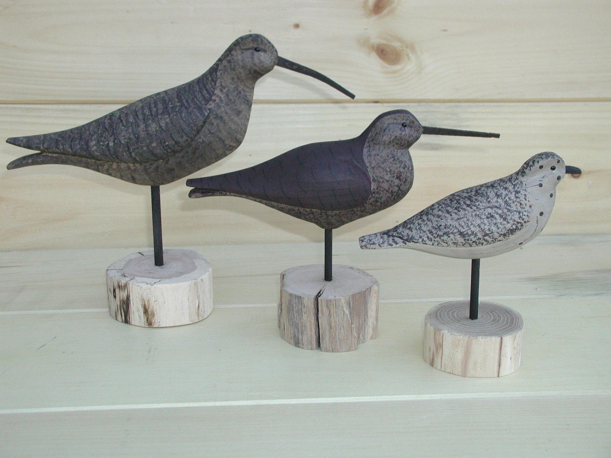 Shore Bird Group