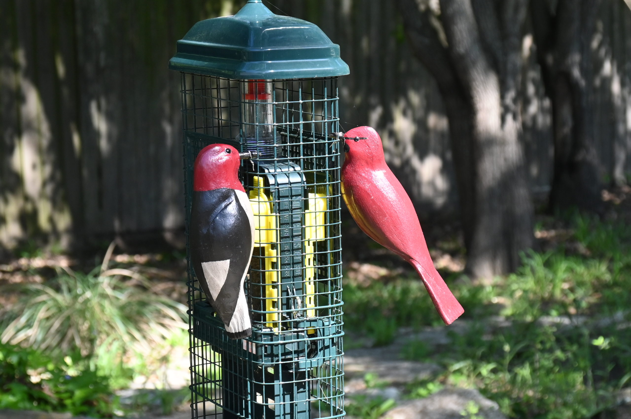 Woodpecker & Cardinal at Feeder
